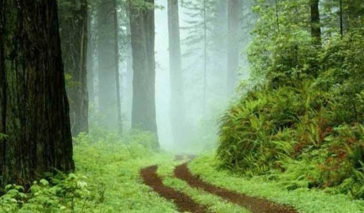 """""""Ce chemin boisé qui mène je ne sais où...?""""... Une photo choisie par Muguette Bailet pour définir le mystère de l'écriture"""